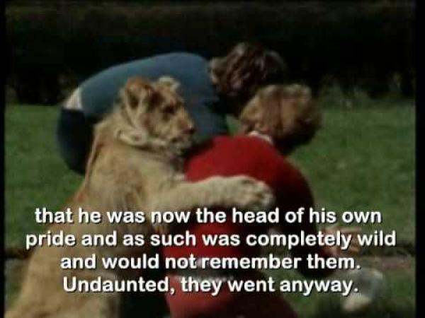 Neuvěřitelný příběh lva Christiana