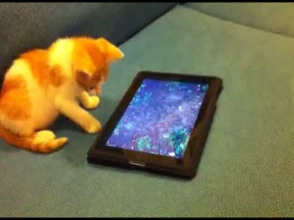 Kočka vs. rybičky v tabletu