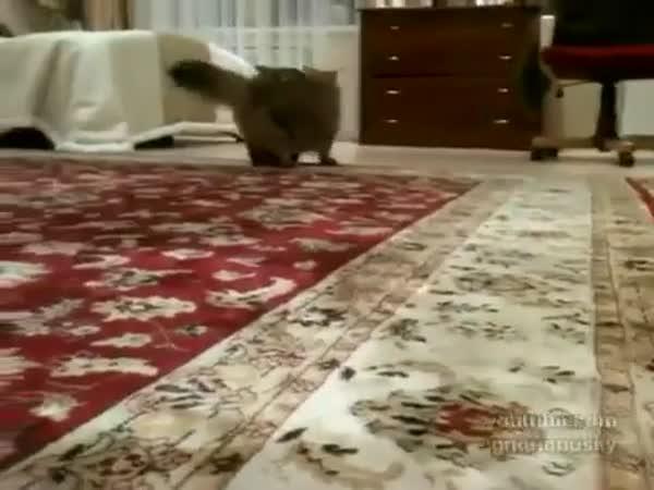 Hyperaktivní štěně vs. líná kočka