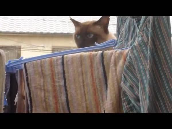 Sebevražedná kočka