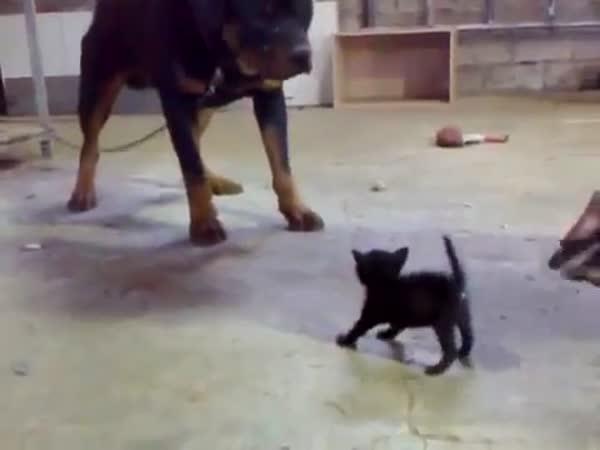 Odvážné kotě