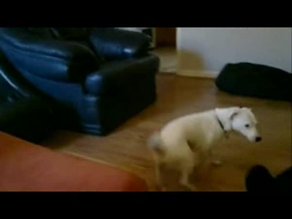 Uklouznutí psa