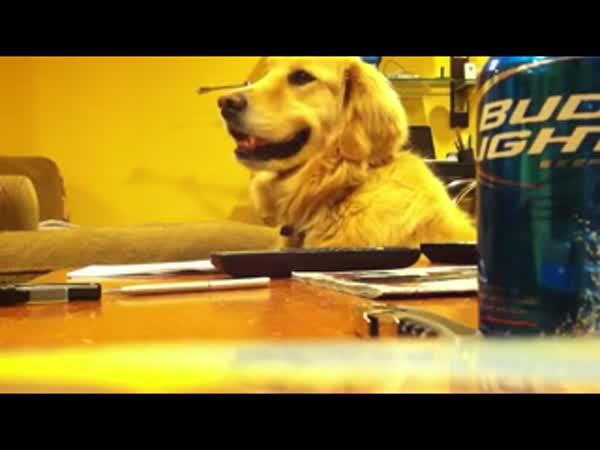 Pes kývající do rytmu [reklama]