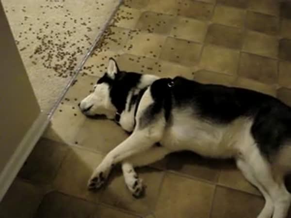 Líný pes