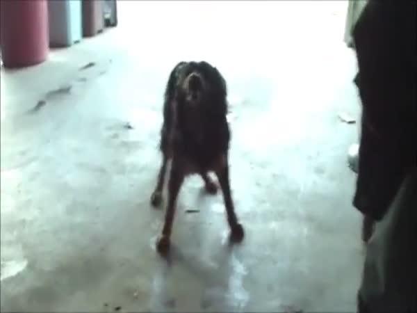 Kýchající psi [kompilace]