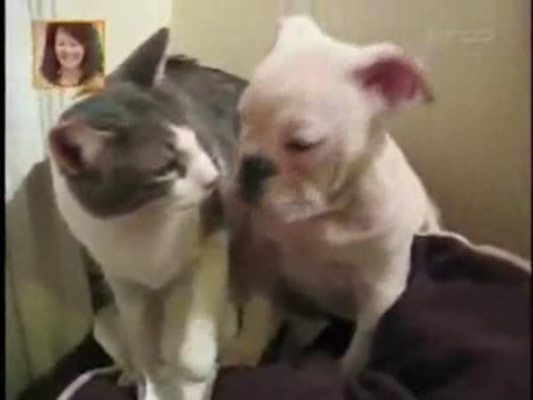 Kočka fackuje psa