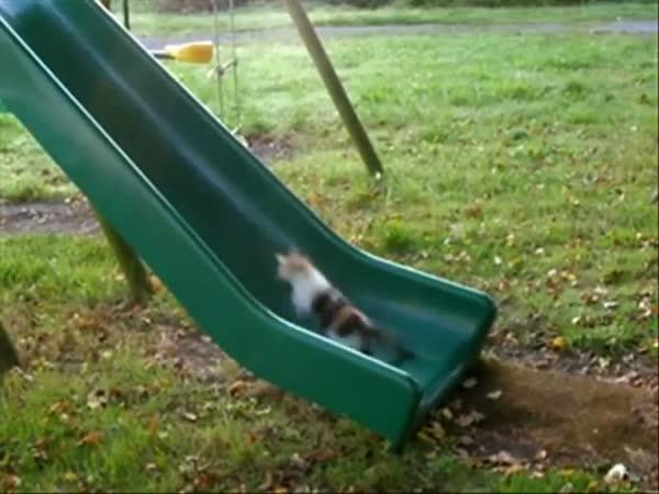 Kočky na skluzavce
