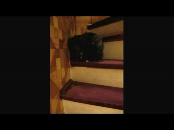 Kočka - Zvláštní způsob lezení do schodů