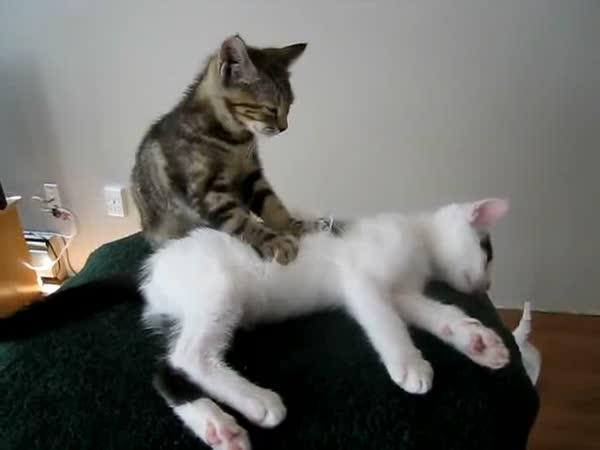 Masírující se koťata