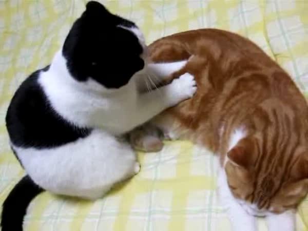 Masírující se koťata II