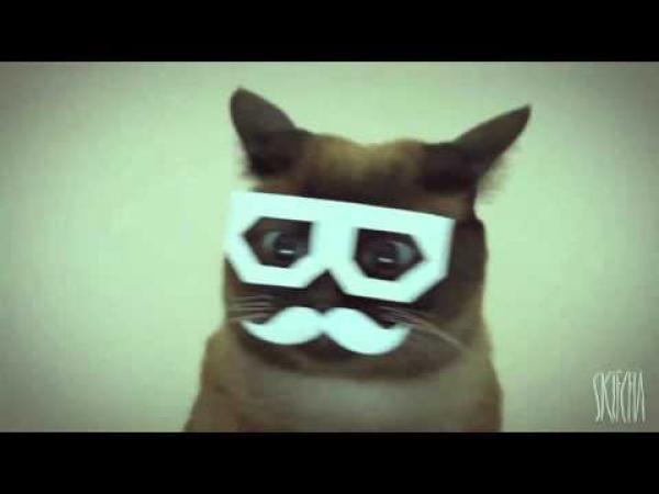 Dubstep kočka