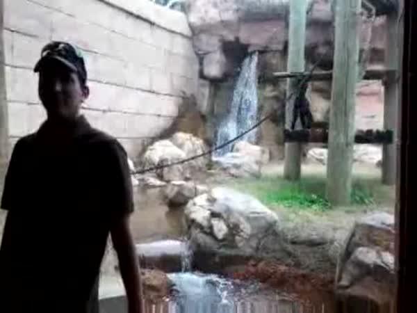 Kung-fu opička