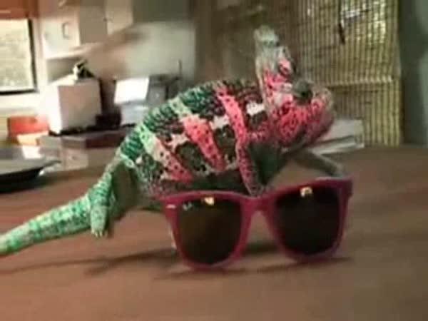 Chameleon v akci