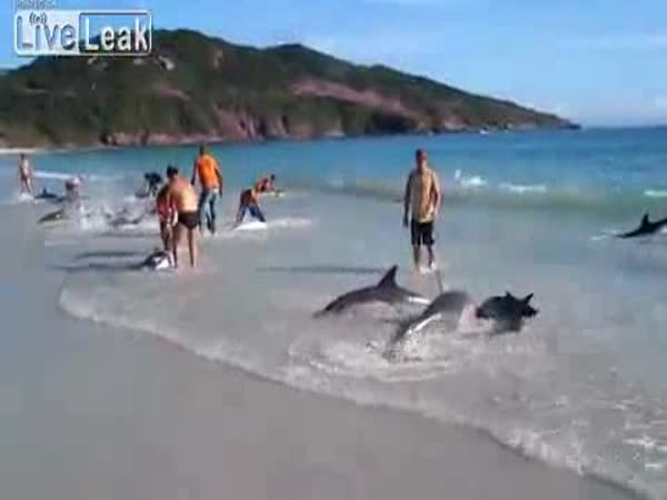 Záchrana 30 delfínů