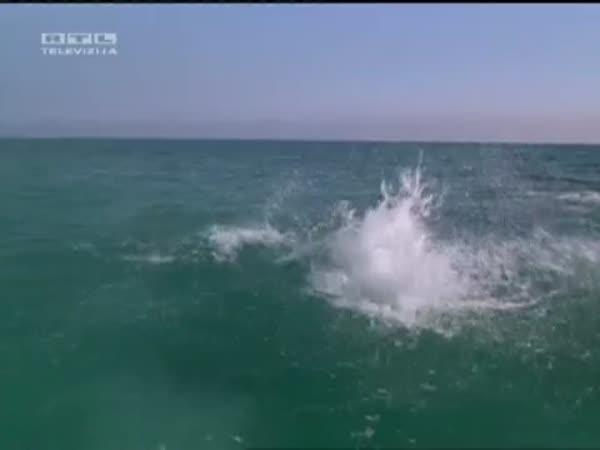 Láska - Pejsek a Delfín