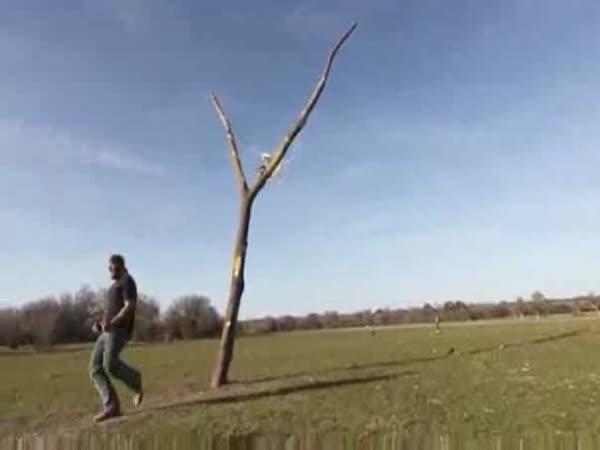 Borec - živí Angry birds