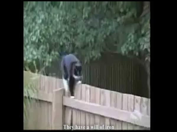 Ninja kočky