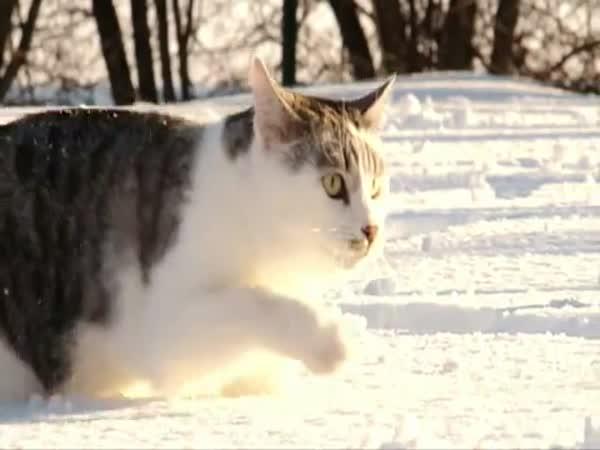 Kočka v hlubokém sněhu