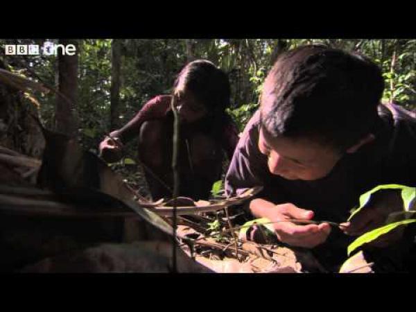 Děti loví největšího pavouka na světě