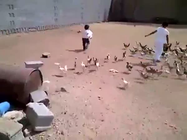 Masožravá kuřata