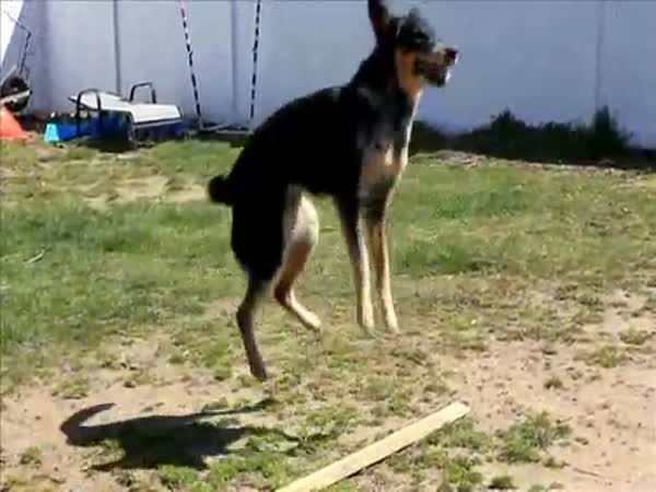 Pes vs. švihadlo