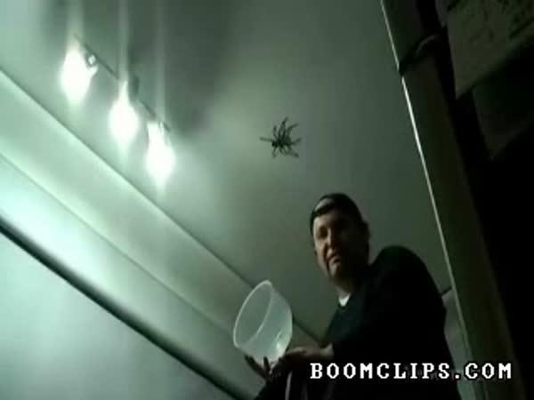 Jak chytit velkého pavouka