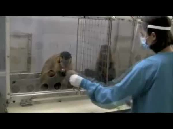 Zábavný experiment s opicemi