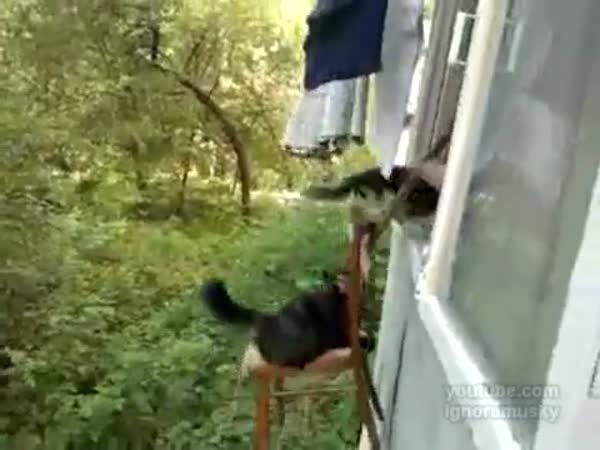 Výtah pro kočky