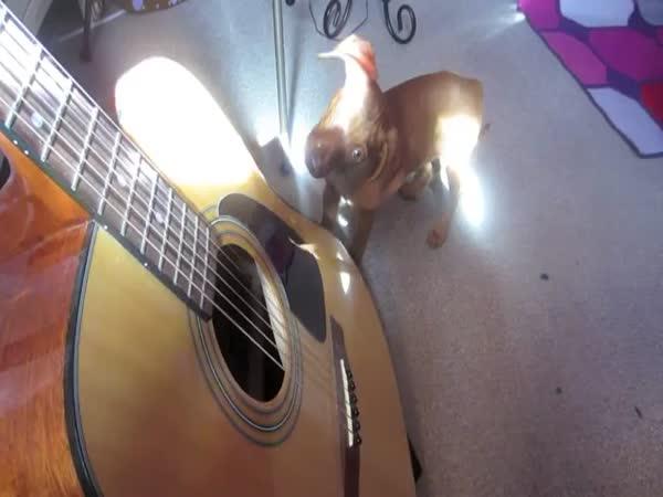 Štěně vs. kytara
