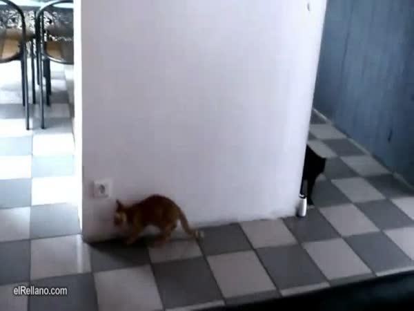 Koťata si hrají