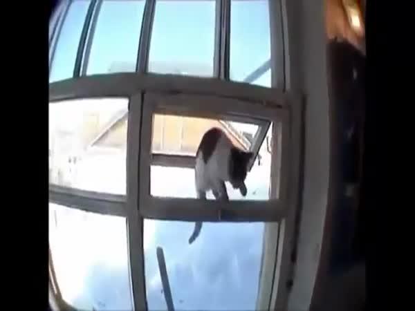 Šikovná kočička