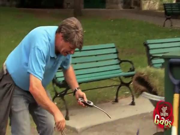 Nachytávka - Hořící pes