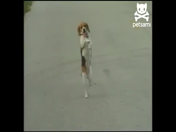 Cirkusový pes