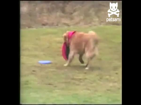 Pes - Aport frisbee
