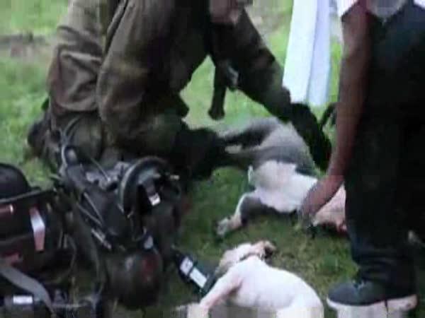 Hrdinové - Záchrana psů
