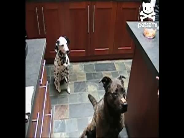 Psi - Sehraná spolupráce
