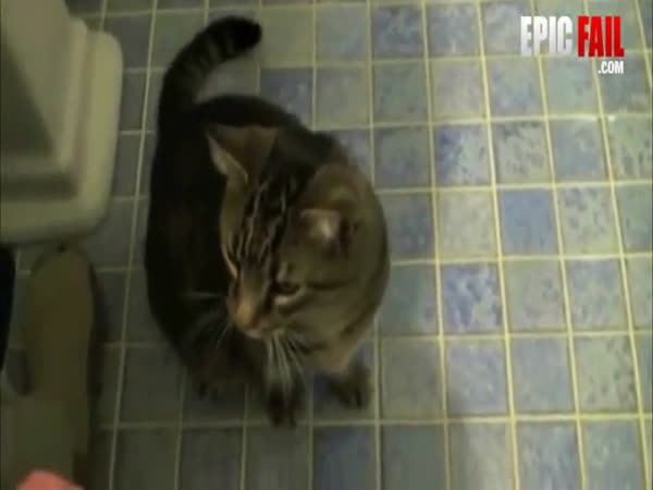 Jak udělat z kočky psa