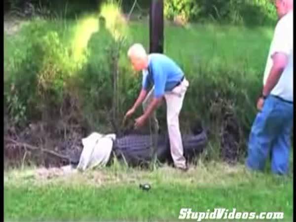 Aligátor - Fail