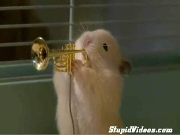 Křeččí kapela
