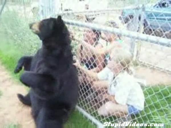 Drbací medvídek