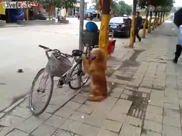 Hlídací pes Ambie