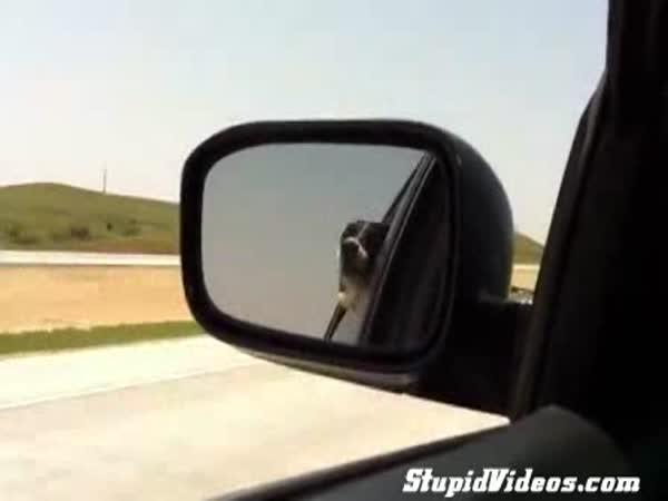 Pes chytá auta