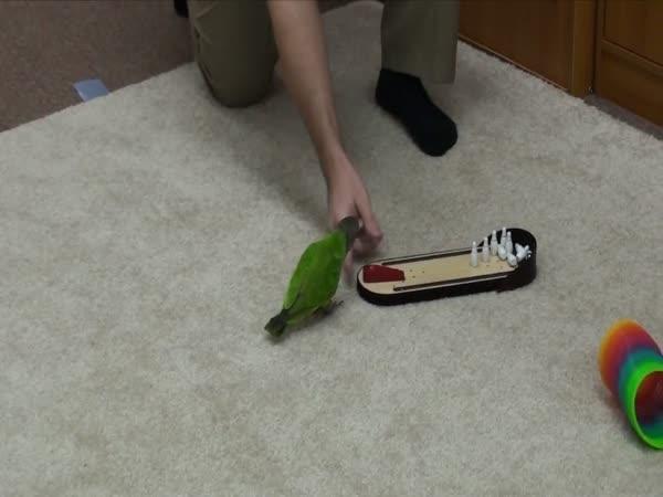 Borec - 20 triků s papouškem