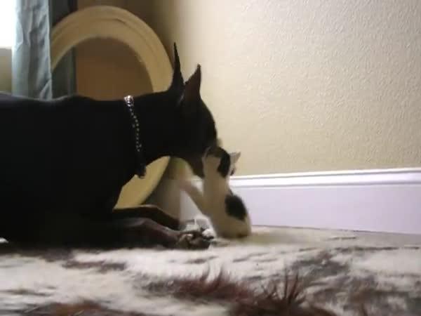 Kotě vs Dobrman - pouze pro dospělé