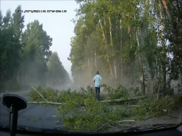 Blbec v autě vs Strom