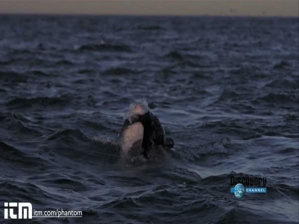 Útok žraloka - slowmotion