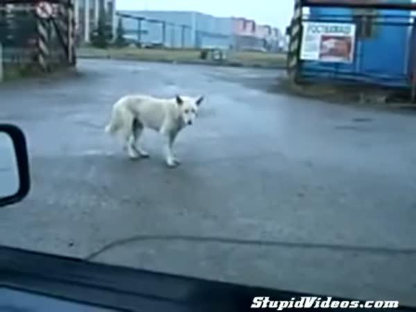 Techno pes