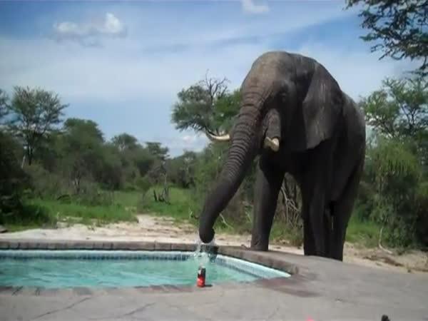 Slon u rodinného bazénu