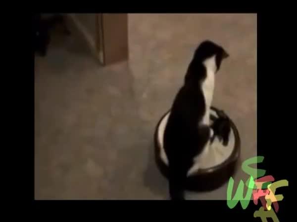 Kočky a kočkování (kompilace)