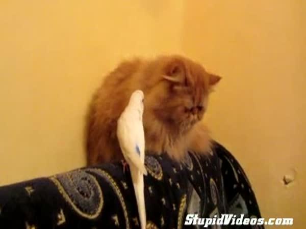 Drzý pták